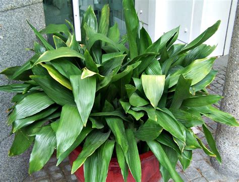 plants for low light low light indoor plants my 20 favorite house plants