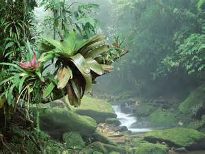Plants In Tropical Rainforest - rainforest webquest march 2011