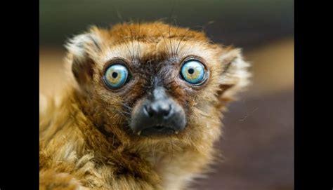 imagenes ojos de animales diez animales con los ojos m 225 s hermosos y raros del mundo