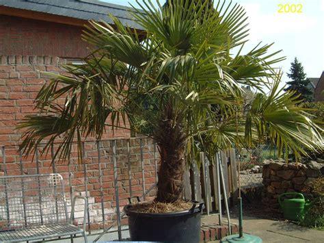 garten kaufen nrw garten 2005 exoten und palmen claus willich
