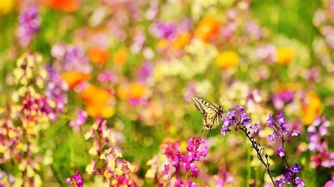 wallpaper flower view flower meadow hd 5458 1920 x 1080 wallpaperlayer com