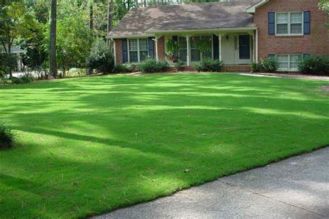 Southern Living Home Decor by Bermuda Grass Lawn Care Quiet Corner