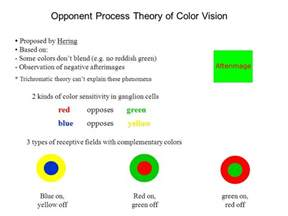 opponent process theory of color vision color vision 3 forms of rhodopsin are sensitive to