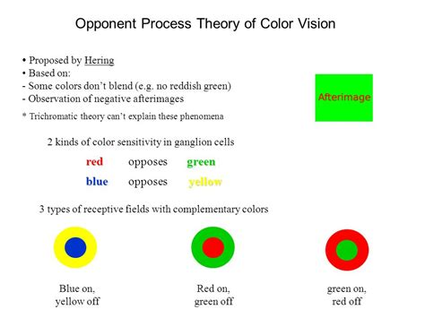 color vision 3 forms of rhodopsin are sensitive to