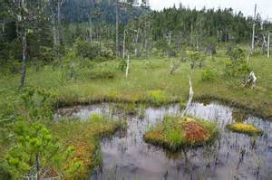 Island Shower Curtain Muskeg Bog With Ponds Mitkof Island Photograph By Konrad
