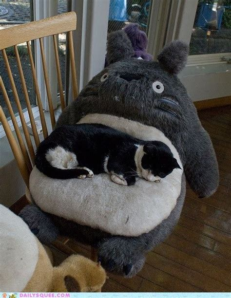 giant cat couch totoro and his cat adorable animals pinterest