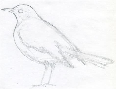 how to draw doodle birds http www easy drawings and sketches images how to