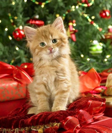 images of christmas cats happy christmas with animals cute animal pictures and