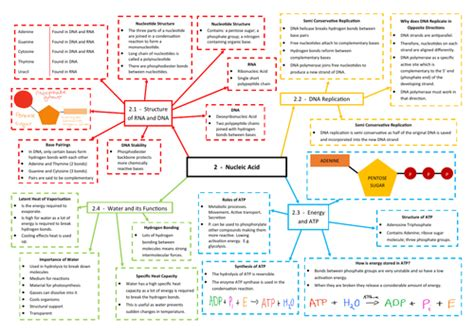 A Level Biology Essay Topics by Nucleic Acids Revision Mind Map Aqa As A Level Biology 7401 7402 By Spars234 Teaching