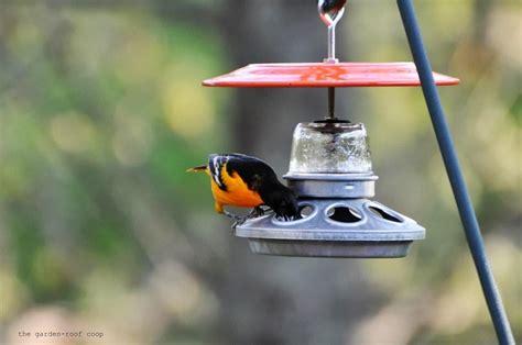 diy oriole bird feeder birdcage design ideas