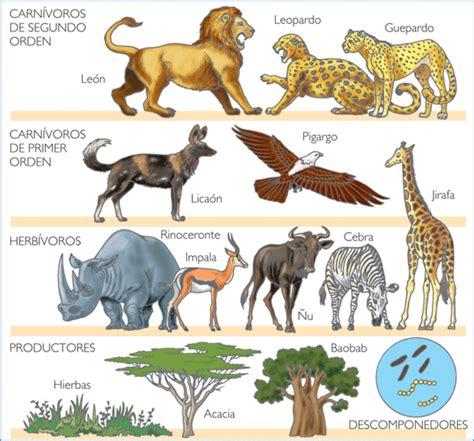 cadena alimenticia la animales los animales alimentaci 243 n de los animales