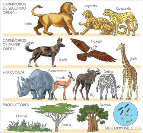 imagenes animales carnivoros herviboros omnivoros datos curiosos de los animales animales herb 237 voros