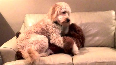 dog comforts sweet dog comforts her friend having a nightmare