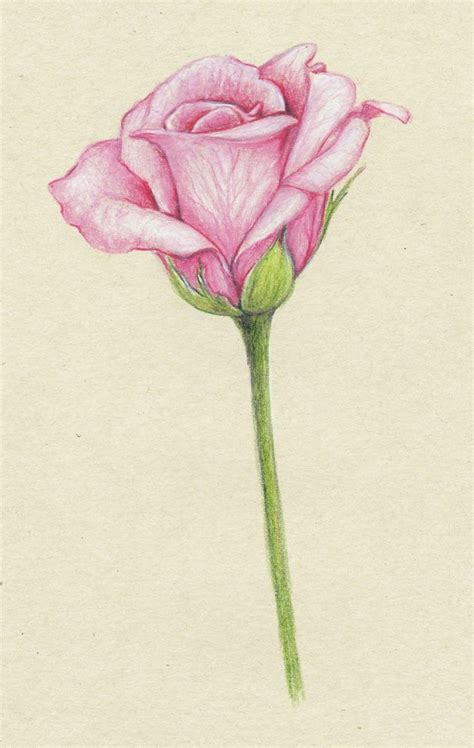 Drawing Roses by Pencil Drawings Of Flowers Pink Roses Things To