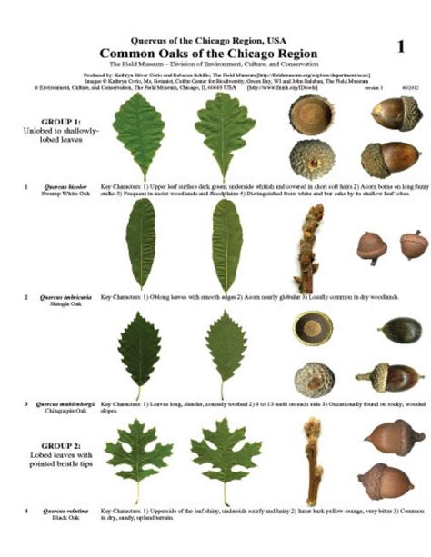 Pdf Trees America Identification Revised by Illinois Common Oaks Of The Chicago Region Field Guides