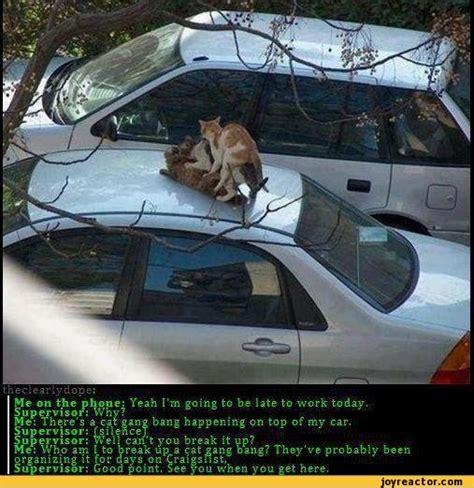 Gang Bang Memes - funny pictures ballsackalliance auto