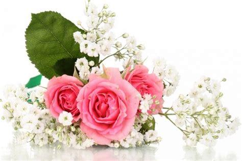 imagenes bellas de rosas blancas bellas flores rosas y blancas 30690