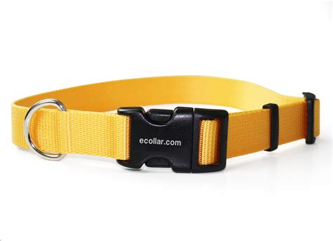 how to a with an electronic collar collar straps 1 inch yellow snap collars