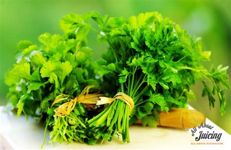 Parsley Detox Heavy Metals by Eliminate Heavy Metals In Your By Juicing Two Common