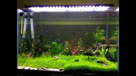 aquascape carpet plants cara praktis menanam carpet seed aquascape