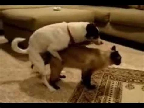 dogs mating with cats dogs mating with cats dogs and cats mating together breeds picture