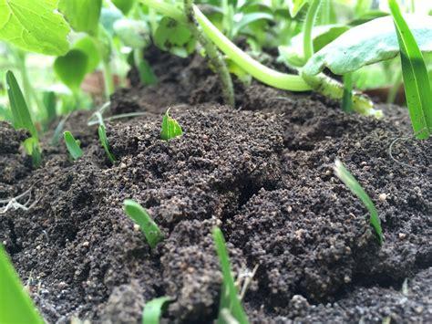 Gardening Dirt Free Photo Dirt Soil Plant Gardening Free Image On