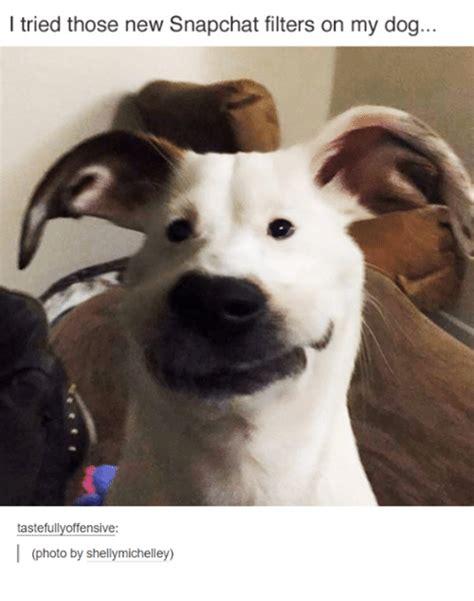 snapchat filters   dog tastefully