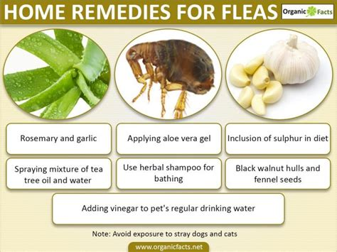 home remedies for fleas organic facts