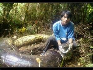 Anaconda vs python part 1 what is the biggest snake in the world