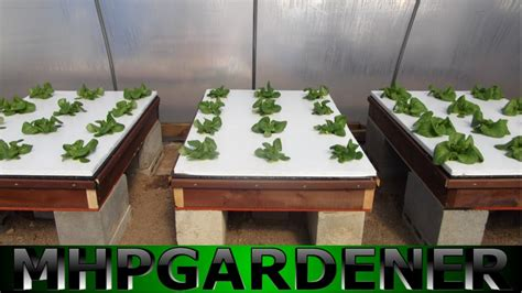 hydroponic lettuce experiment comparing water soluble