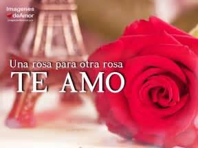 imagenes de rosas te amo 10 im 225 genes de rosas hermosas para decir te amo