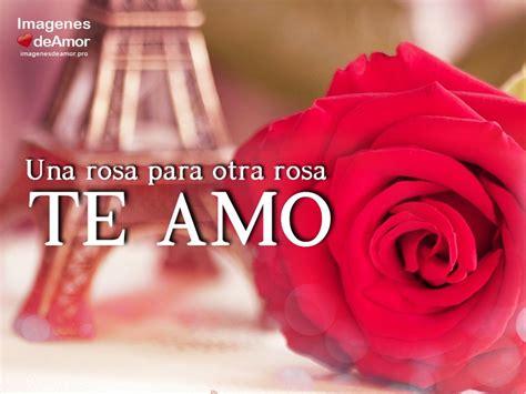 imagenes que digan te amo con una rosa 10 im 225 genes de rosas hermosas para decir te amo