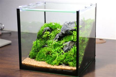 Japanese Lotus Square Plate L 15cm W 15cm H 35cm 1 15 キューブ水槽で苔テラリウム サカナと水草 たまに苔
