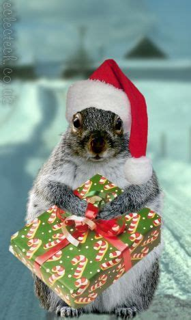 festive squirrel cute squirrel squirrel funny christmas animals