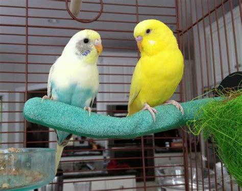 bringing a new bird home preparing for a pet bird