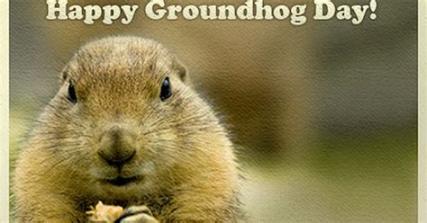 groundhog day uk a pop culture addict s guide to groundhog day facts