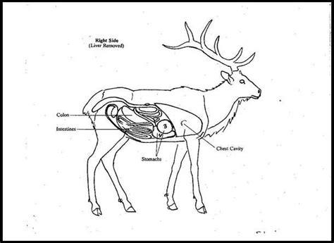 elk anatomy diagram elk anatomy overlays