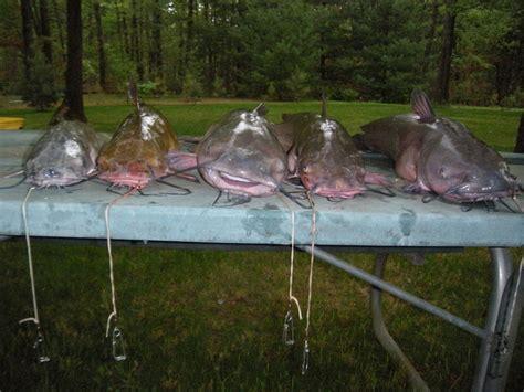 table rock lake crappie fishing table rock lake 4 11 through 4 15 crappie catfish bass