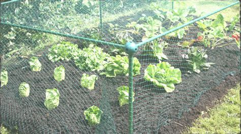 Vegetable Garden Netting Frame Fruit Vegetable Protection Frames Anti Bird Netting