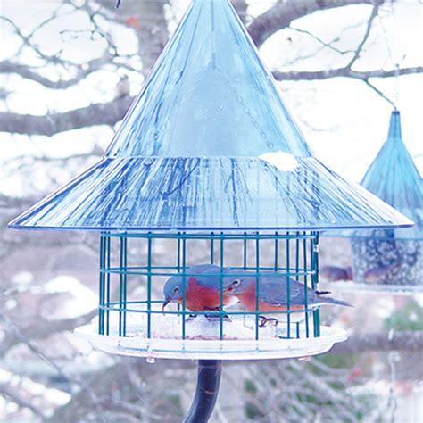 duncraft com arundale the arundale sky cafe bluebird feeder