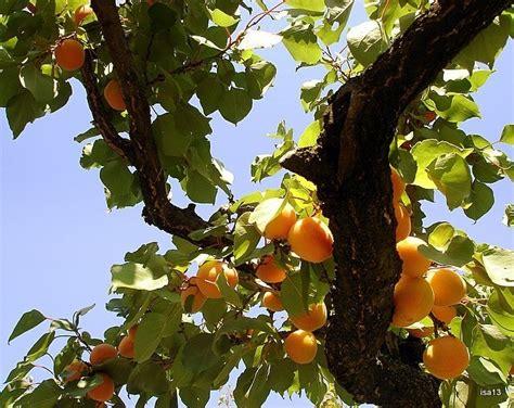 Digital Fruit Tree Maze Perlengkapan Bayi 1 37 best haiti images on haiti caribbean and