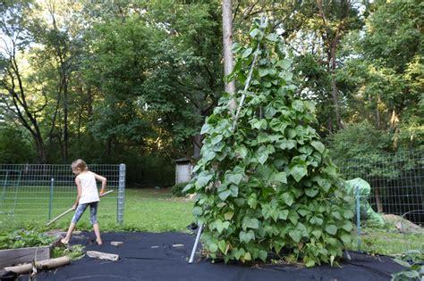 build a garden trellis how to make a tripod garden trellis from pvc pipe how