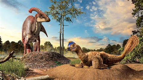 images of dinosaurs missing link between dinosaur nests and bird nests