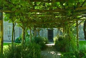 Vine Covered Pergola by Gallery For Gt Pergola With Vines
