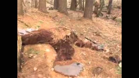 Find Dead Bigfoot Found Dead Bigfoot Real Evidence In 2013