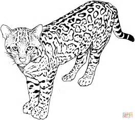 leopard color leopard 5 coloring page free printable coloring pages