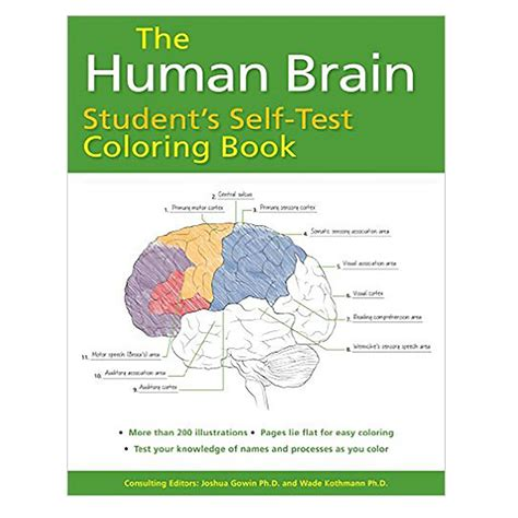 anatomy of the brain coloring book the human brain student s self test coloring book