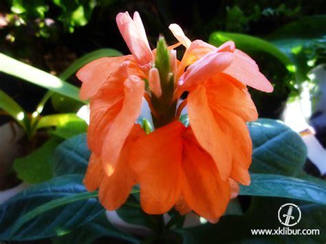 imagenes de flores isoras flores flores y m 225 s flores