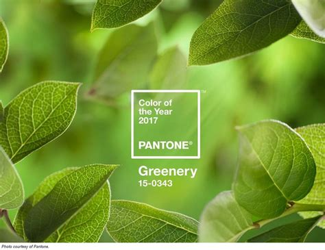 color of 2017 pantone s color of the year 2017 greenery