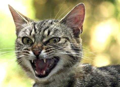 cat cat catitude what is my cat so petmd